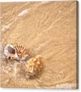 Seashell Turbulence Canvas Print