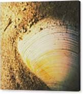 Seashells And Beach Colours Canvas Print