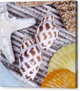 Seashells And Starfish Canvas Print