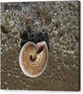 Seashells By The Sea Canvas Print