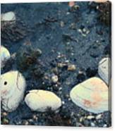 Seashells By The Water Canvas Print