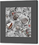 Seashells Collage Of Any Color Canvas Print