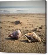 Seashells In The Sand Canvas Print