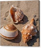 Seashells On The Sand Canvas Print