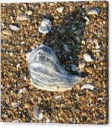 Seashells On The Seashore Canvas Print