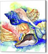 Seashells Canvas Print