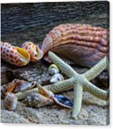 Seashells And Driftwood Canvas Print