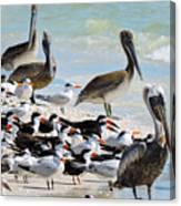 Seashore Gathering Canvas Print