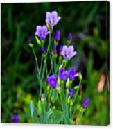 Seaside Gentian Wildflower  Canvas Print