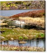 Seaside Marsh Canvas Print