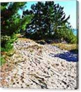 Seaside Path Canvas Print