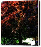 Seattle Chateau Ste Michelle Tree Canvas Print