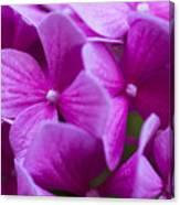 Seattle Summer Flowers Canvas Print