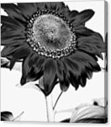 Seattle Sunflower Bw Invert - Stronger Canvas Print