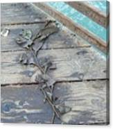 Seaweed At Rest  Canvas Print