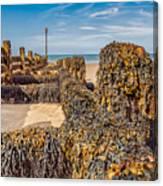 Seaweed Covered Canvas Print