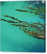 Seaweed Patterns Canvas Print