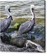 Sebastian Inlet State Park Vii Canvas Print