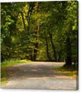 Secluded Forest Road Canvas Print