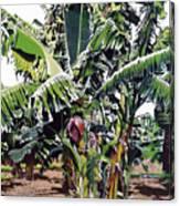 Second Bananas Canvas Print