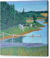 Second Peninsula Cows Canvas Print