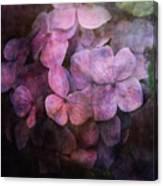 Secret Hydrangea 1538 Idp_2 Canvas Print