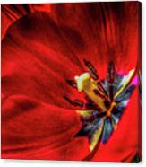 Secret Of The Red Tulip Canvas Print