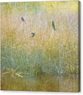 Secrets Buried In August Canvas Print