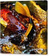 Secrets Of The Wild Koi 2 Canvas Print