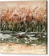 Sedge Canvas Print