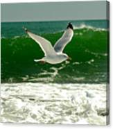 See Gull Canvas Print