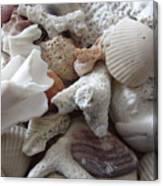 See Sea Shells Fom The Sea Canvas Print