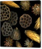 Seeds And Pods Canvas Print