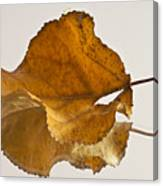 Seeing Double Autumn Leaf  Canvas Print