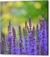 Seeing Purple Canvas Print
