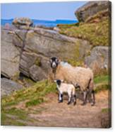 Seep And Lamb Canvas Print