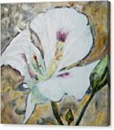 Sego Lily Canvas Print