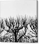 Seine River Trees Canvas Print