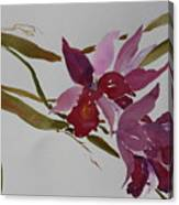 Selby Orchids Canvas Print