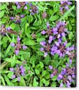 Selfheal In The Lawn Canvas Print