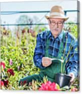 Senior Gardener Selecting A Tree. Canvas Print