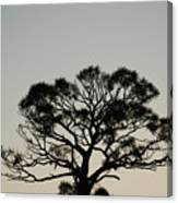 Senset Trees Canvas Print