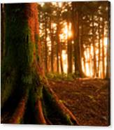 Sentiel Of The Forest Canvas Print