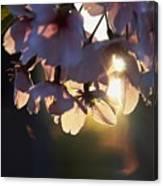 Sentimental Blooming Canvas Print