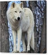 Sentry Wolf Canvas Print