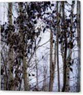 Sepia Aspens Canvas Print