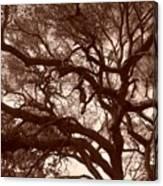 Sepia Branch Burst Canvas Print