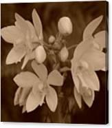 Sepia Flower Canvas Print