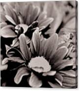 Sepia Flowers Canvas Print