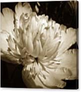 Sepia Peony Flower Art Canvas Print